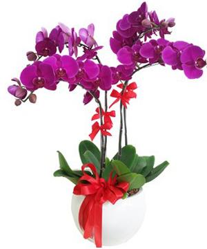 hoa lan hồ điệp 04